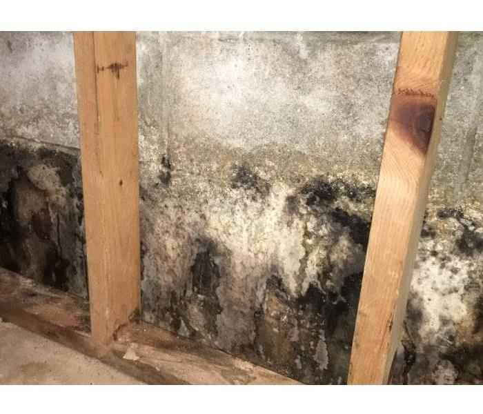 Mold Remediation The 10 Things You Need to Know About Mold